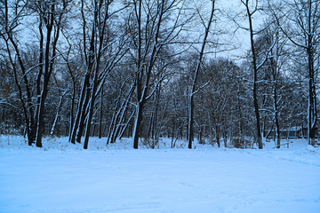 Views of the fabulous snow in the winter forest.
