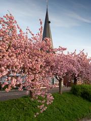 Altes Land, Kirchturm in Jork-Borstel zur Blütezeit