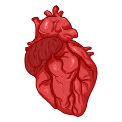 Vector Cartoon Human Heart. Anatomical Organ Illustration.