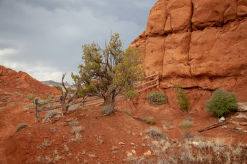 Juniper Tree and Old Fence, Southern Utah