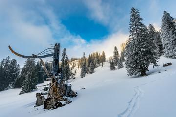 Schneeschuhwanderung am Hochgrat