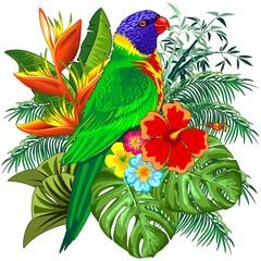 Rainbow Lorikeet Exotic Colorful Parrot Bird Vector Illustration