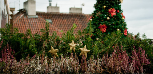 Horizontal image of fir hedge with Christmas tree on the background