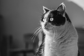 A black and white photo of a black and white cat with big eyes was taken in a garden