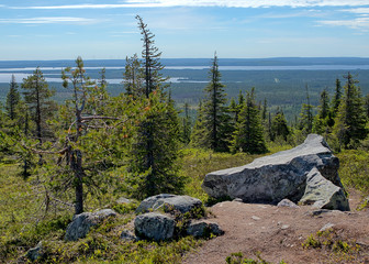 Summer landscape with spruce trees in the wilderness of Riisitunturi national park, a mountain in Lapland in Finland. Big stones on the foreground and a distant lake on the background.
