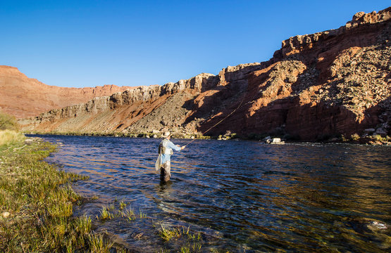 Man Fly Fishing On the Colorado river near Lees Ferry AZ