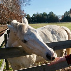 Horse Scratching on Fence