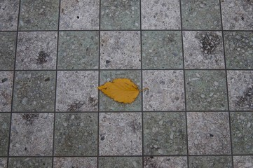 Leaf on a Chess Board