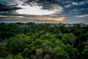 Cities of Brazil - Manaus, Amazonas - Views from MUSA (Amazonian Museum)
