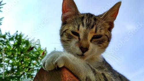 Bury kot z pazurkami na tle nieba i drzew