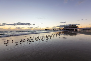 Birds on the sandy beach with wooden pier in the background during a vibrant sunrise. Taken in Daytona Beach, Florida, United States.