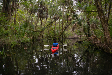 Adventurous girl kayaking on a river covered with trees. Taken in Chassahowitzka River, located West of Orlando, Florida, United States.