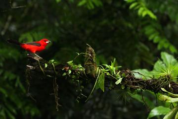 Recess Fitting Bird bird on a branch