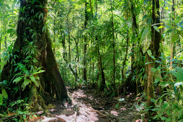 inside a green luxurious tropical jungle path, guadeloupe, french west indies