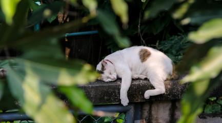 Cat sleeping at wall, Cute pet