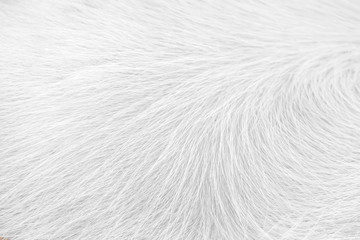 White clean horse fur texture nature for background