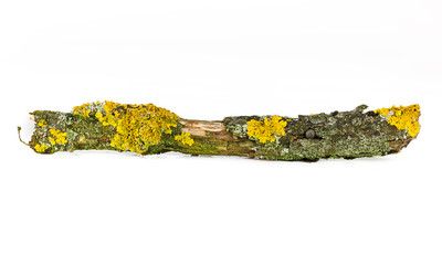 border frame of dry wood branches close up isolated on a white background. Lichen on a tree branch isolated on white background. Lichen on a tree branch.