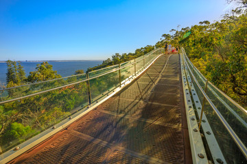 Glass bridge in Kings Park and Botanical Garden overlooking South Perth suburb on the Swan River, Western Australia. Sunny day, blue sky with copy space. People cross the bridge in the distance.