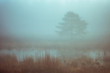 Misty cyan forest tree