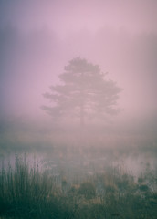 misty pink forest tree