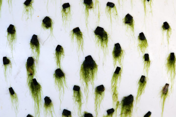Wall Mural - abstract of green moss background
