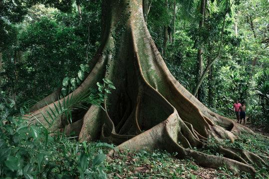 Großer Baum mit Menschen im Dschungel