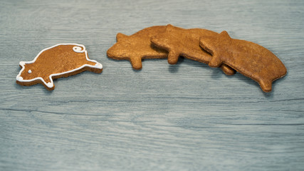 Fragrant gingerbread piggy for good luck on wood background. Pig shaped cookies with one individual independent leader. Concept of win, success, leadership, exceptionality or New Year and Xmas card.