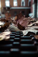 brown leafs on metal