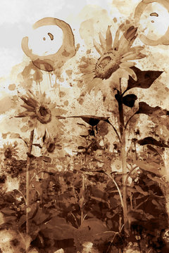 Sunflower Nature. Digital Art Coffee stain panting.