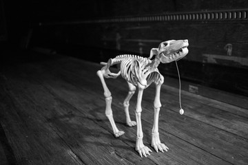 dog skeleton toy