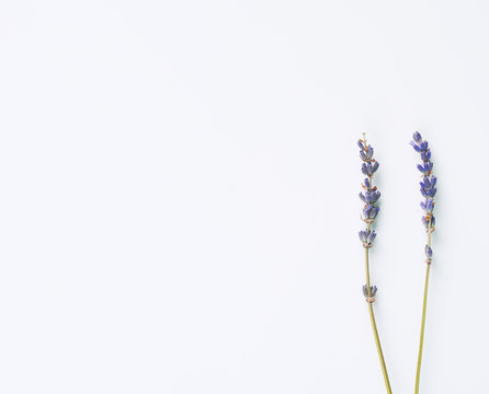 violet lavender flowers arranged on white background. Top view, table flat lay. Minimal concept. Dry flower floral composition. Pastel trendy colors card mockup.