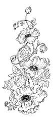 Poppy flowers in vector graphic design illustration