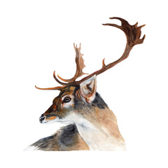 Deer Watercolor Painting ,Print Wall Art ,Hand painted. Deer Illustration isolated on white background.