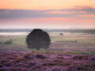 Foto op Plexiglas Lavendel Roydon Common Dawn