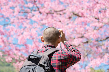 Back view of man taking photo of cherry blossom