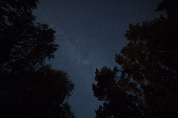 Starry sky in the forest upward perspective