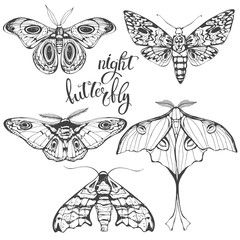 Butterflies, night insects. Vector hand-drawn illustration on a white background. Collection of isolated elements for design.