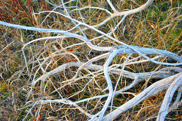 White apple tree old withered branches without leaves  laying on meadow with yellow autumn grass, top view