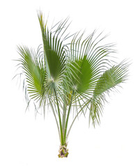 Palm tree leafs cut out on white background. Jungle objects set.