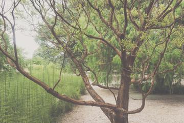 Tree on natural environment photograph