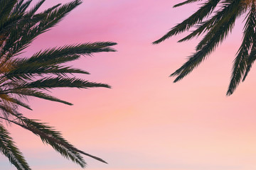 silhouette tropical palm tree with sun light on sunset sky. Copy space. Summer vacation and  travel concept.