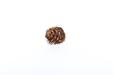 An isolated fir cone on white background