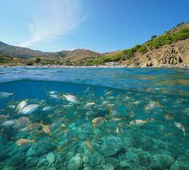 France Pyrenees Orientales coast fish underwater