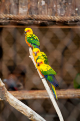 Parrots on the zoo.