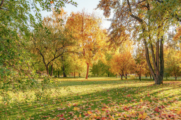 autumn landscape, Tsaritsyno park, Russia, Moscow, yellow foliage