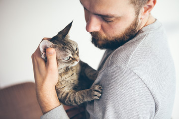 Close-up of a tabby Devon Rex cat and beard man. Attractive guy is holding in his arms cute purring cat and is cuddling it. Cat enjoys humans company