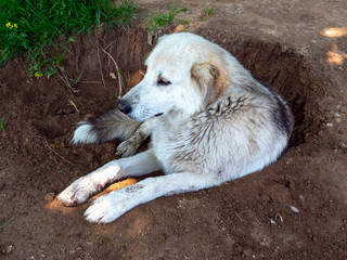 Dog resting in a hole in the nature