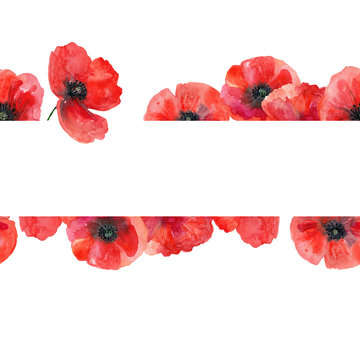 Seamless watercolor template with poppies. Hand drawn watercolor illustration. Isolated on white background.