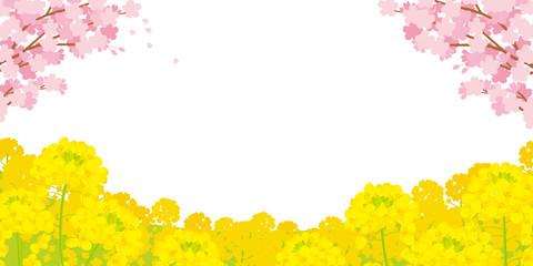 桜と菜の花 背景イラスト