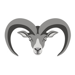 ram face ,vector illustration ,front view